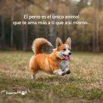 imagenes con frases de perros