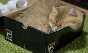imagenes de gatos bonitos con frases