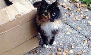 imagenes de gatos tumblr