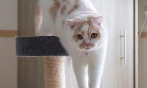 imagenes de gatos con frases bonitas
