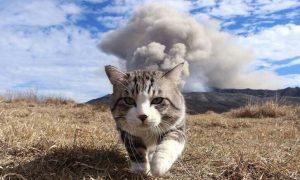 imagenes de gatos chistosos con frases