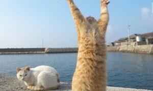 imagenes de gatos para whatsapp
