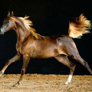 imagenes de caballos con frases