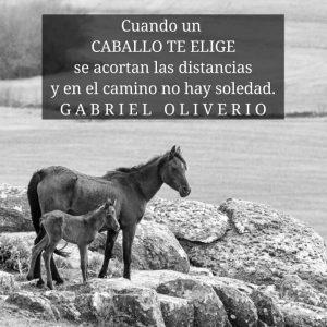 imagenes de caballos hermosos