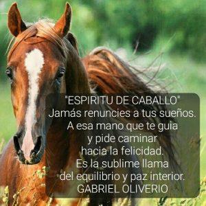 imagenes de caballos bonitos