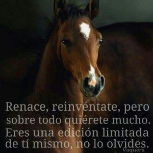 imagenes de caballos para descargar