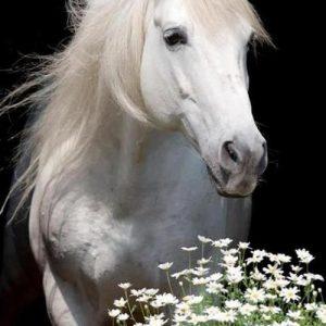 imagenes de caballos para fondo de pantalla