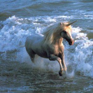 imágenes de unicornios bonitos