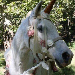 imagenes de unicornios tiernos
