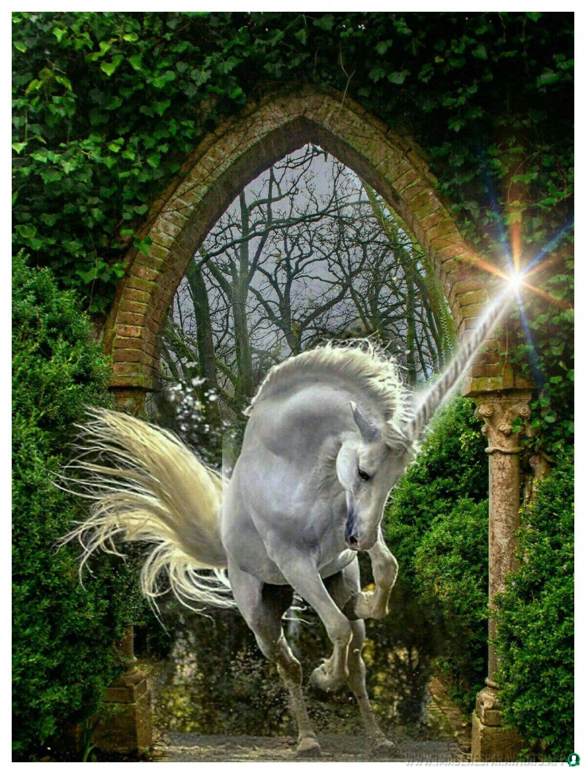 Imagenes-de-unicornios-102