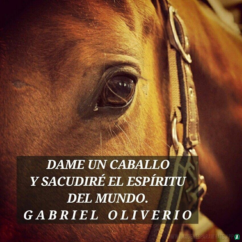 Imagenes-de-caballos-117