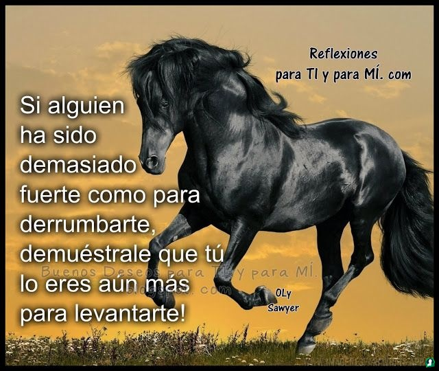 Imagenes-de-caballos-95