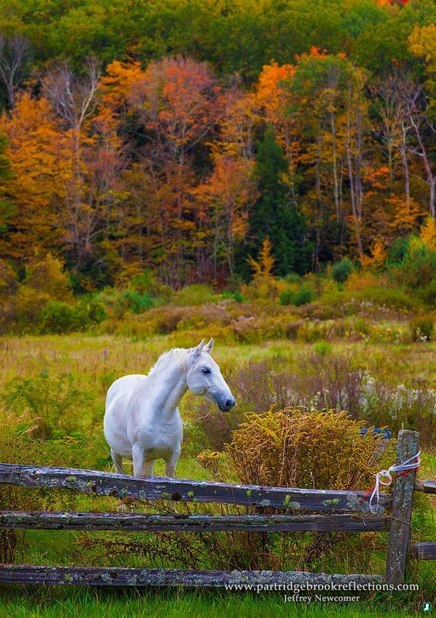 imagenes de caballos (1021)