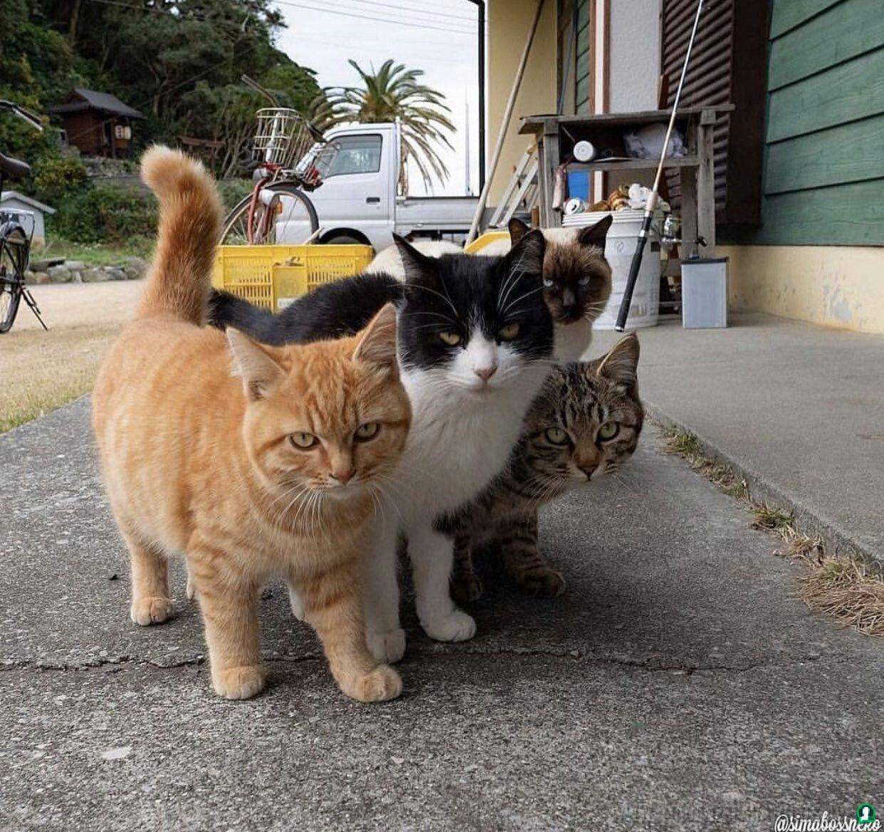 Imagenes-de-gatos-80