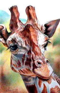 Imagenes-de-animales-32