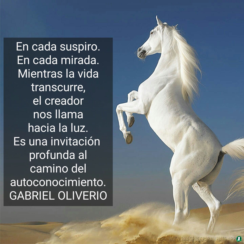 Imagenes-de-caballos-133