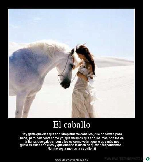 imagenes de caballos (1032)
