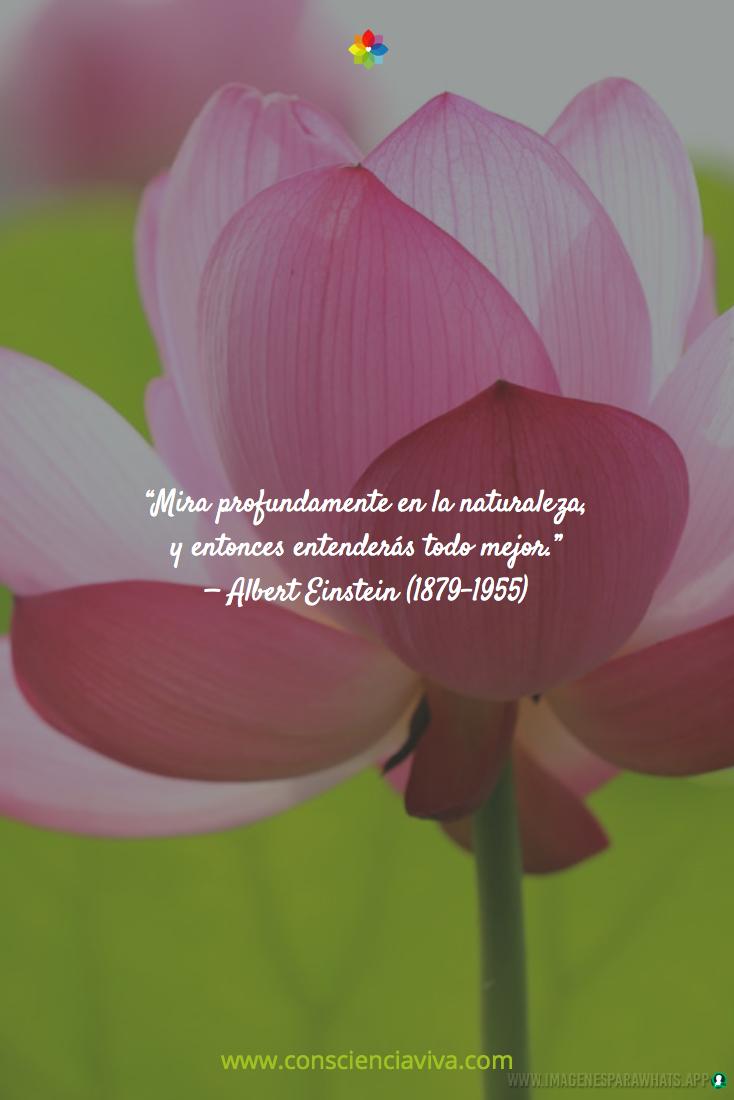Flores-con-frases-4