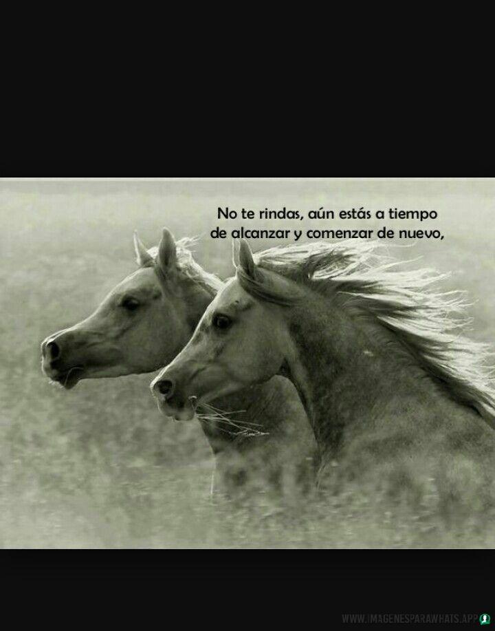 imagenes de caballos (1085)