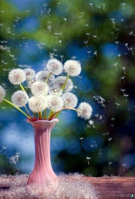 flores con frases (762)