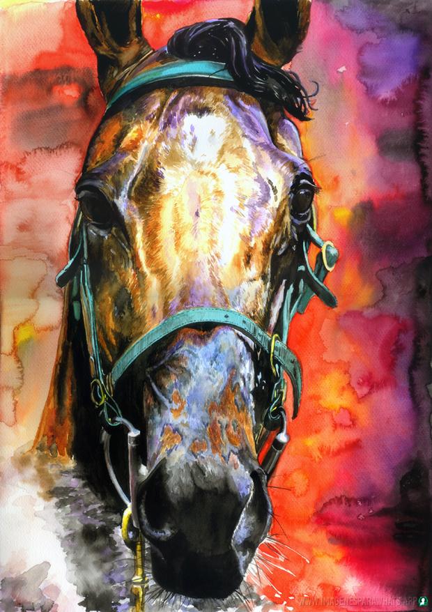 Imagenes-de-caballos-10