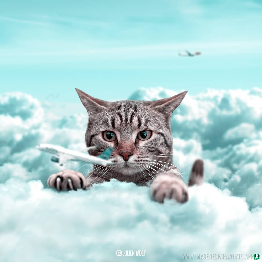 imagenes de animales whatsapp (103)