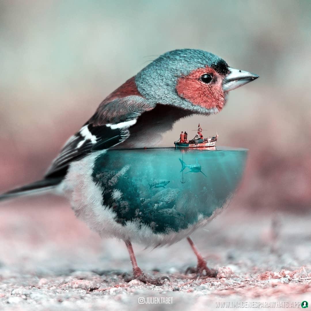 imagenes de animales whatsapp (82)
