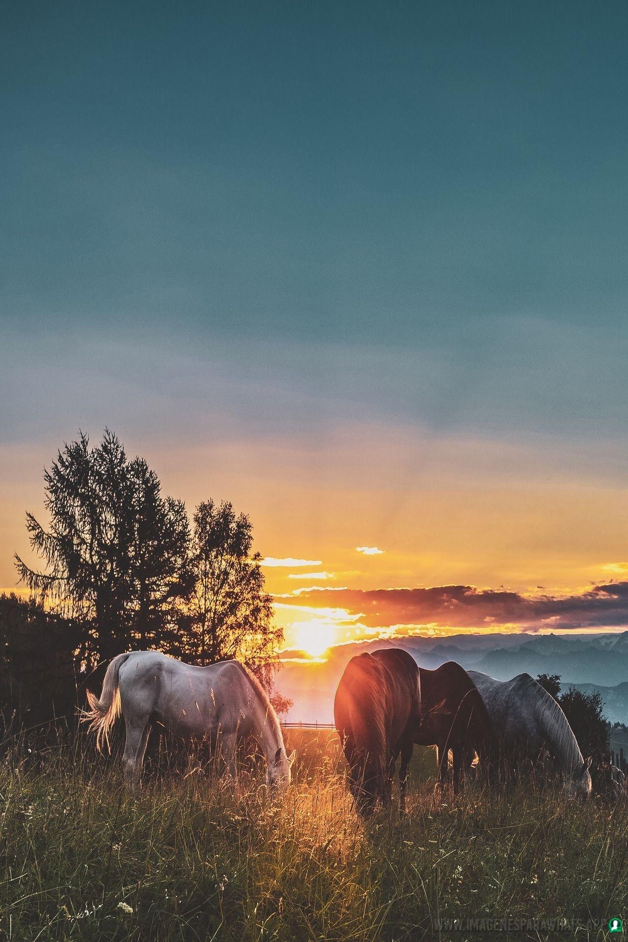 Imagenes-de-caballos-120