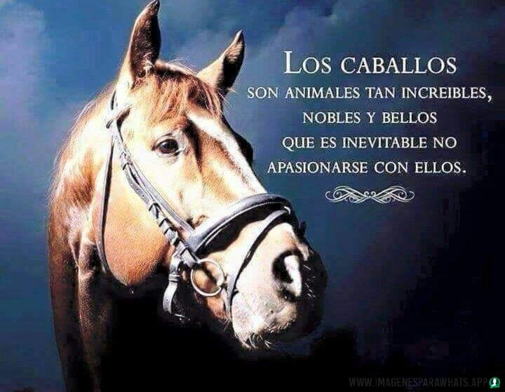 Imagenes-de-caballos-109