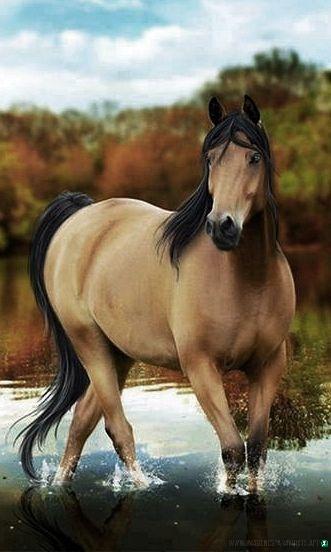Imagenes-de-caballos-113