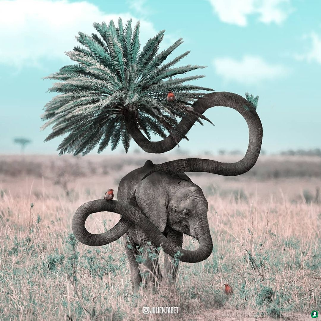 imagenes de animales whatsapp (237)