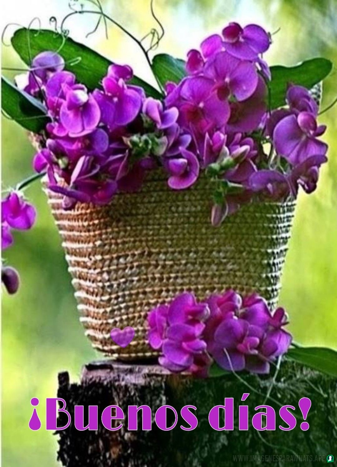 Flores-con-frases-1