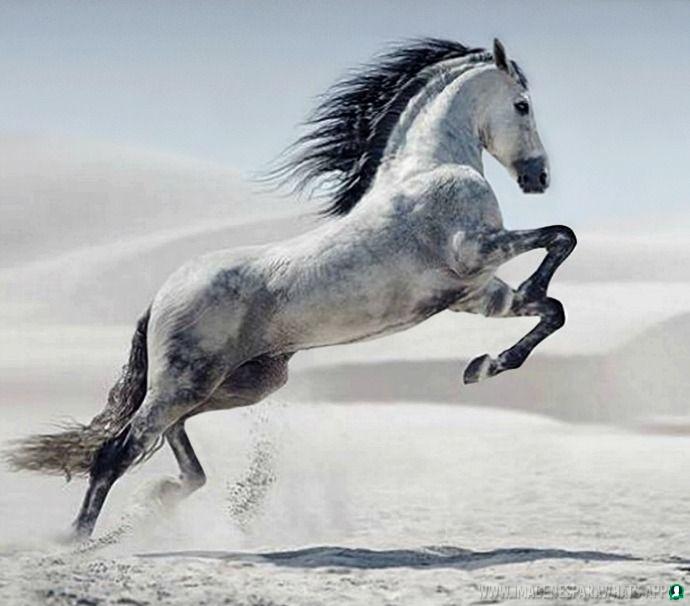 imagenes de caballos (974)
