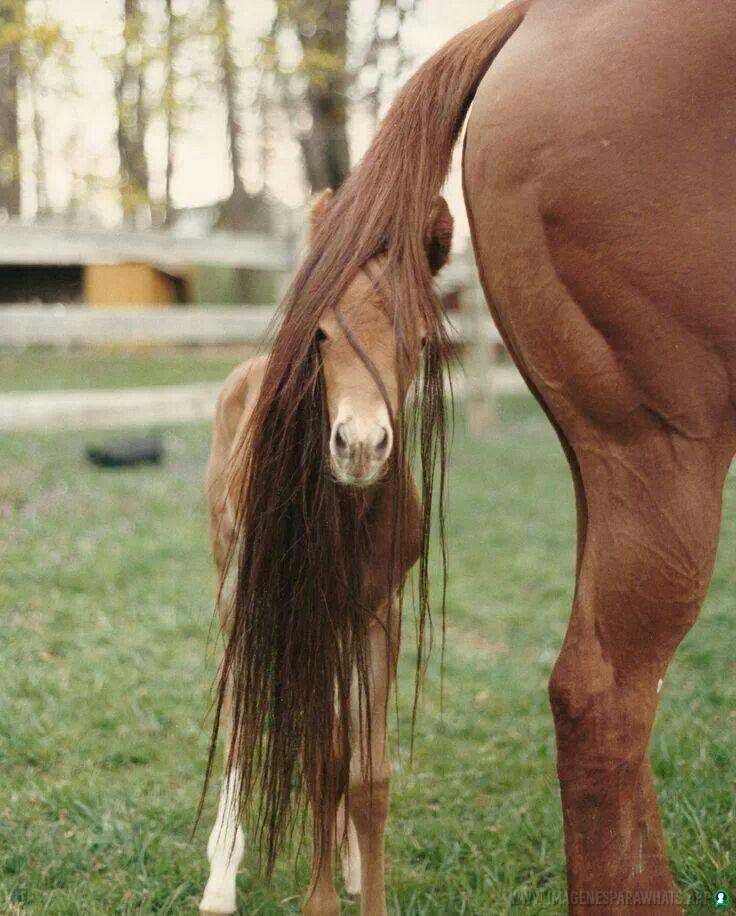 Imagenes-de-caballos-87