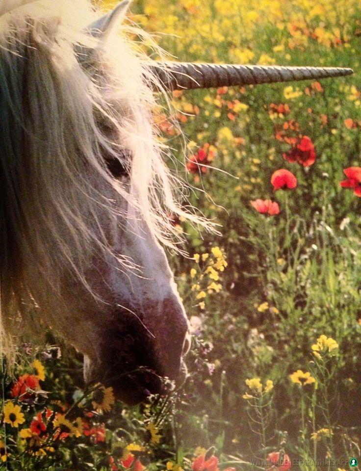 imagenes-de-unicornios (48)