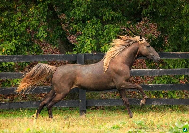 Imagenes-de-caballos-55