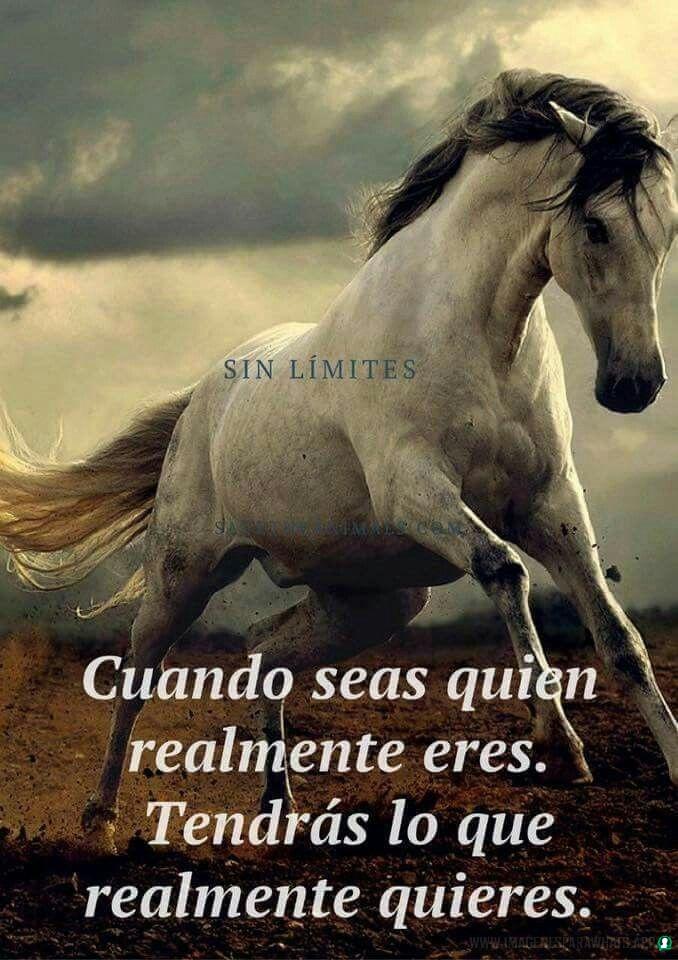 imagenes de caballos (1000)