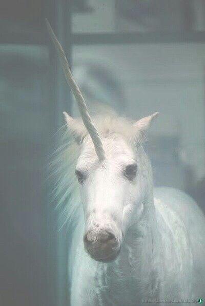 imagenes-de-unicornios (112)