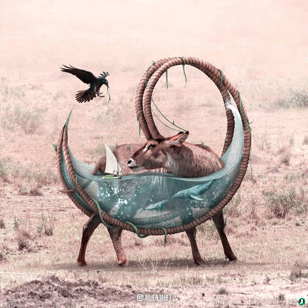 imagenes de animales whatsapp (220)