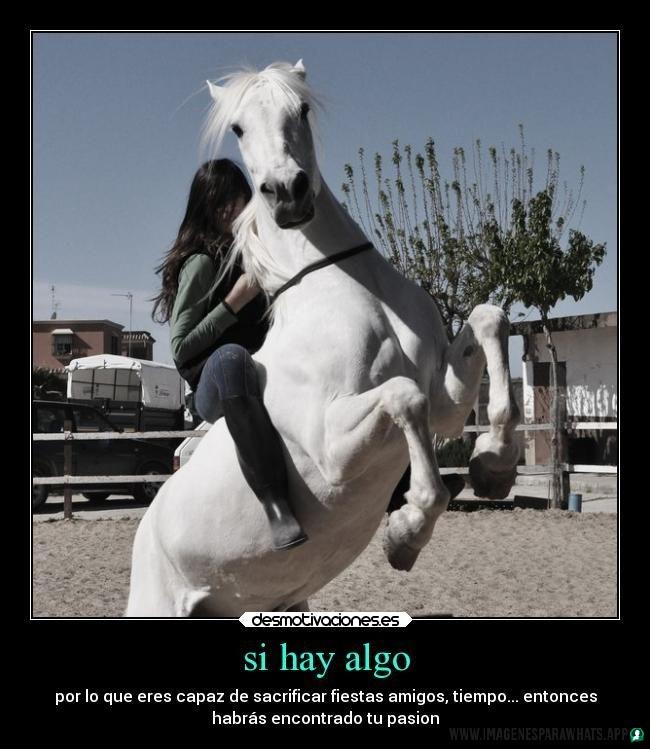 imagenes de caballos (1015)