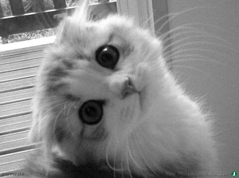 Imagenes-de-gatos-22
