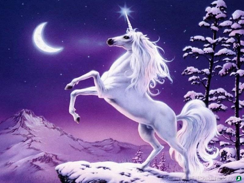 imagenes-de-unicornios (18)