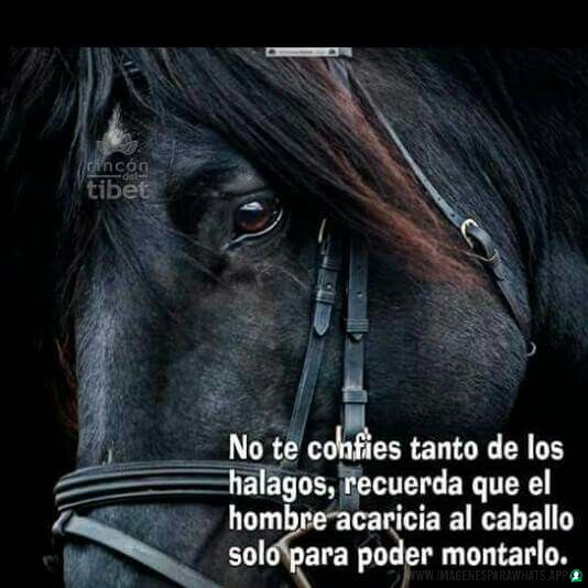 Imagenes-de-caballos-64