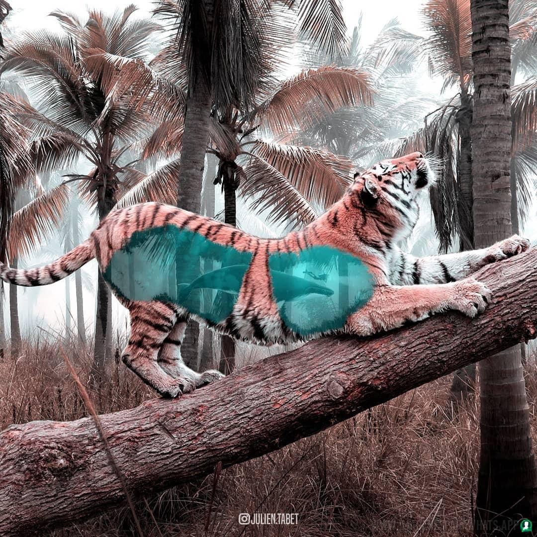 imagenes de animales whatsapp (77)