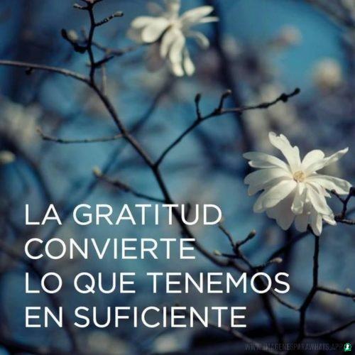 Frases de Agradecimiento (17)