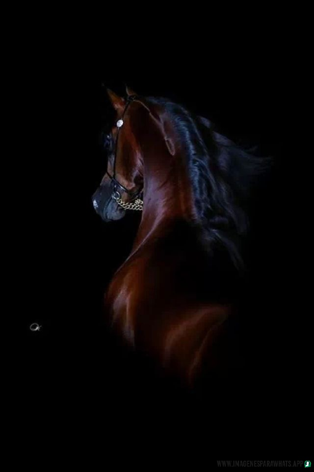 Imagenes-de-caballos-14