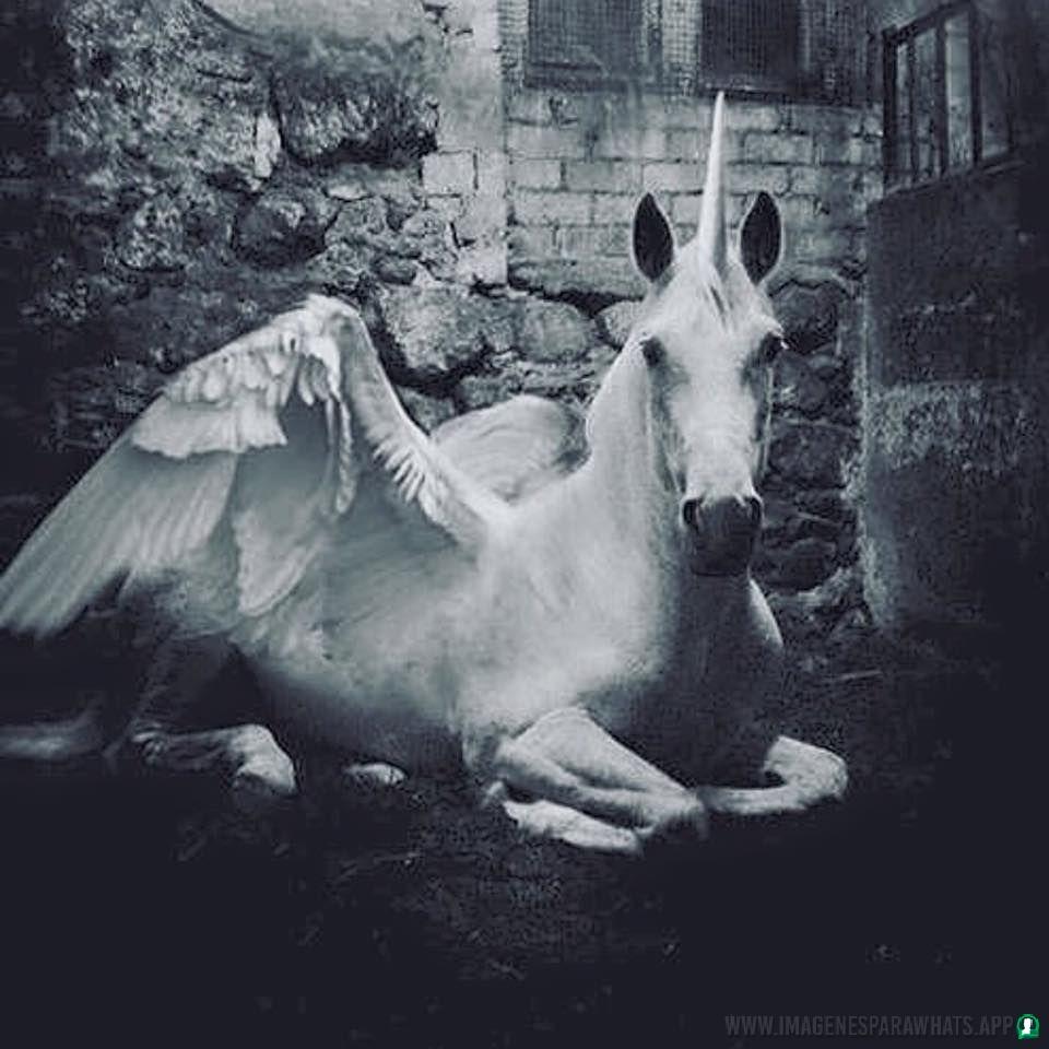 Imagenes-de-unicornios-79
