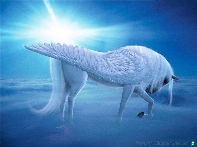 Imagenes-de-unicornios-22