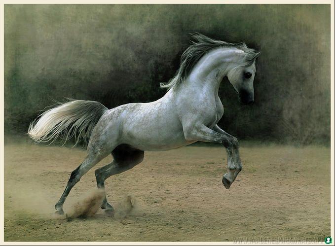 Imagenes-de-caballos-38