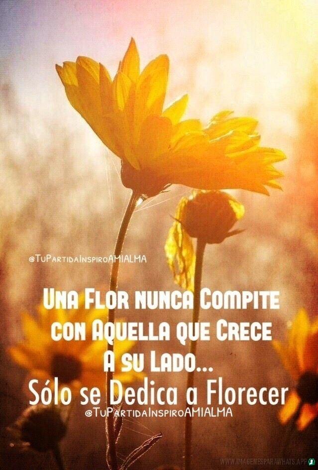 Flores-con-frases-6
